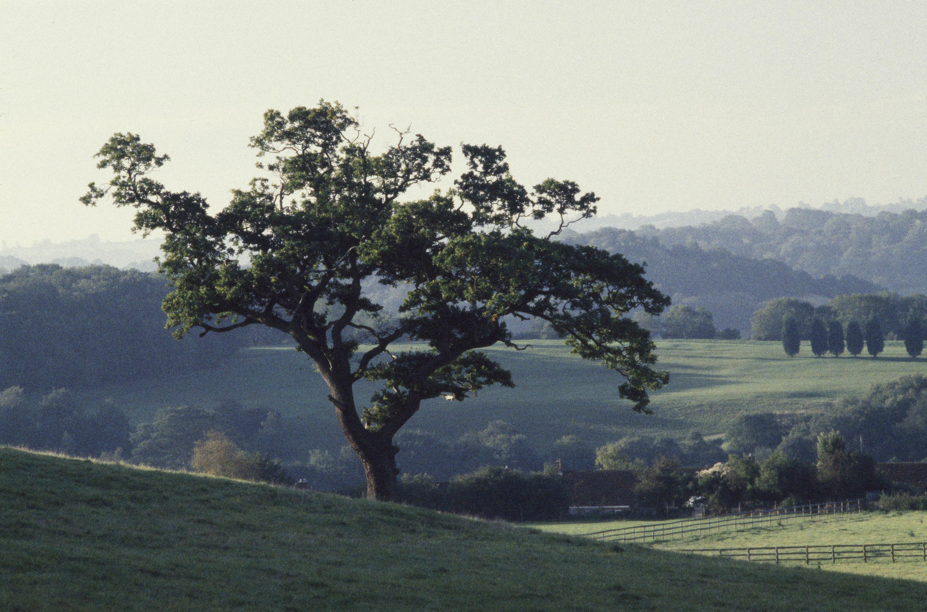Countryside of the County of Wessex, England, UK